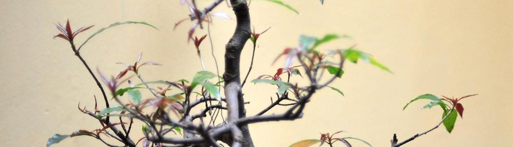 Birdist